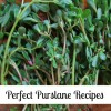 Purslane: Recipes with the Wonder Plant